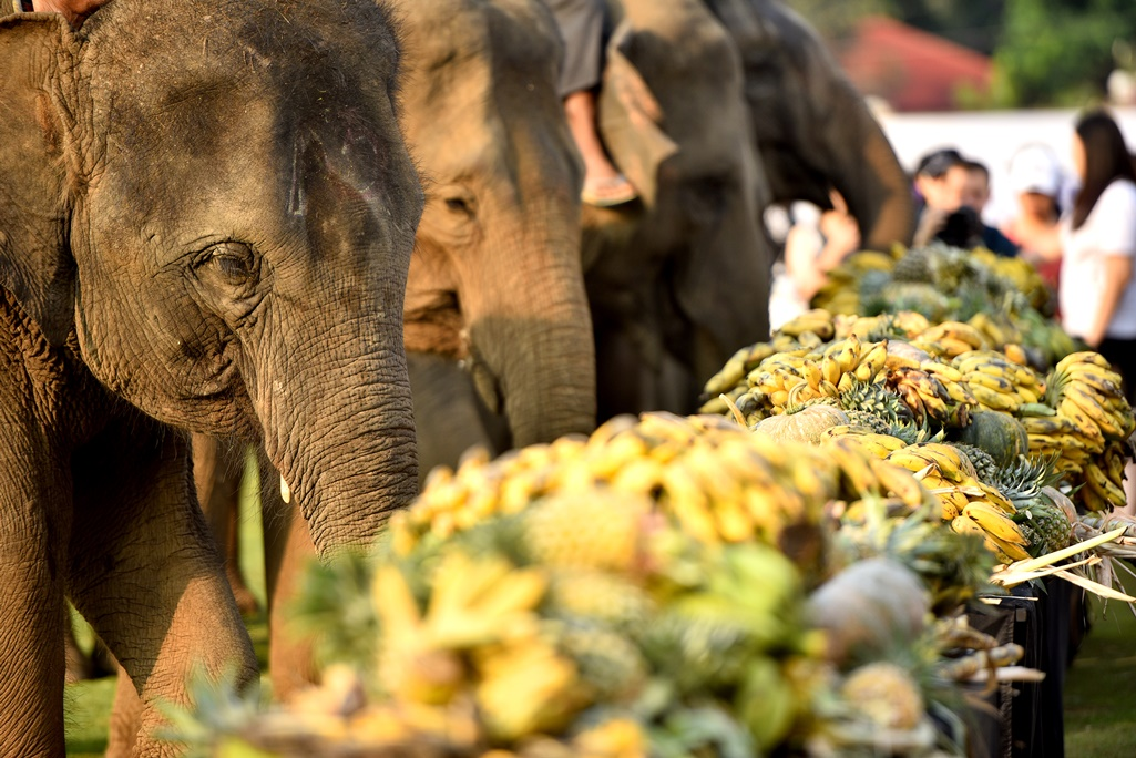 Anantara replaces controversial elephant polo with new boat racing event