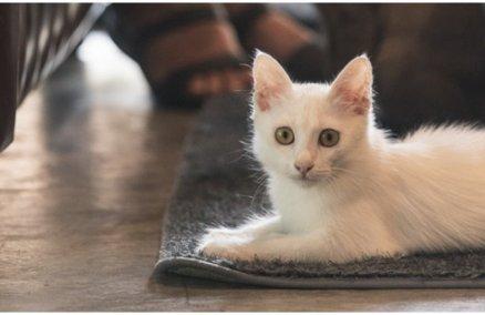 PAWS Bangkok Adoptable Cat Cafe