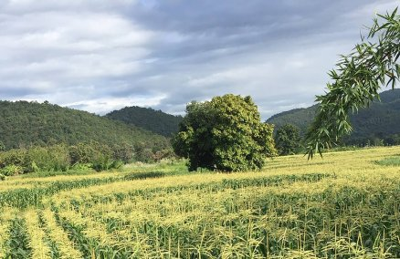 Ori9in is helping to establish a more sustainable farming system in Thailand