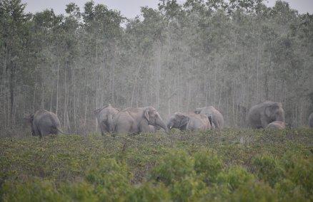 Image credit: WWF-Thailand