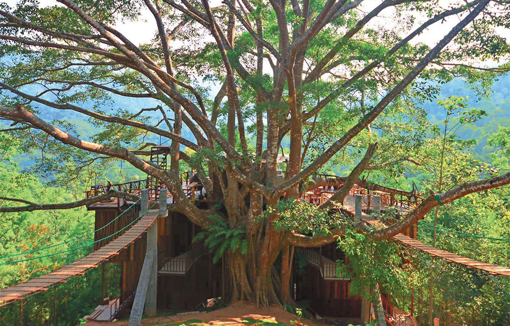 Chiang Mai's must-visit jungle cafes