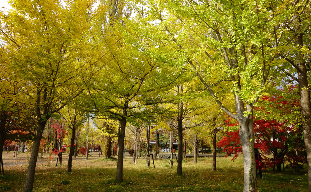 Autumn trees at Oike-kuen Park