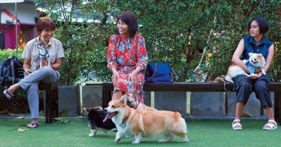 Bangkok's best dog-friendly restaurants, businesses, parks