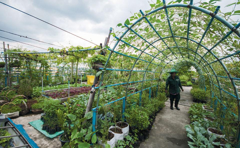 Can Urban Farming Feed Bangkok Bk Magazine Online