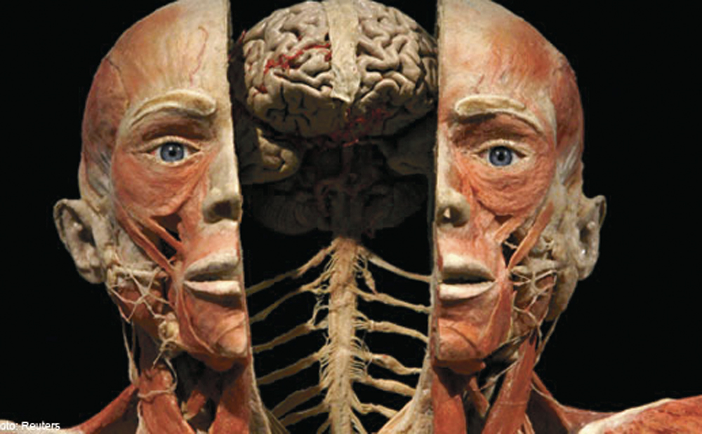 See Human Anatomy On Display At The Body Show Bk Magazine Online